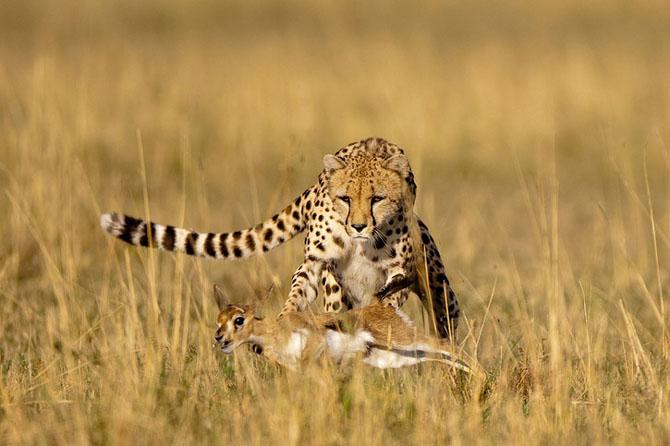 Asa poze nu vezi in fiecare zi: Paul Souders - Poza 10