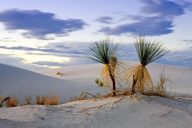 Ireal de frumoasa, natura - Cecil Whitt - Poza 4