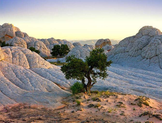 Ireal de frumoasa, natura - Cecil Whitt - Poza 13
