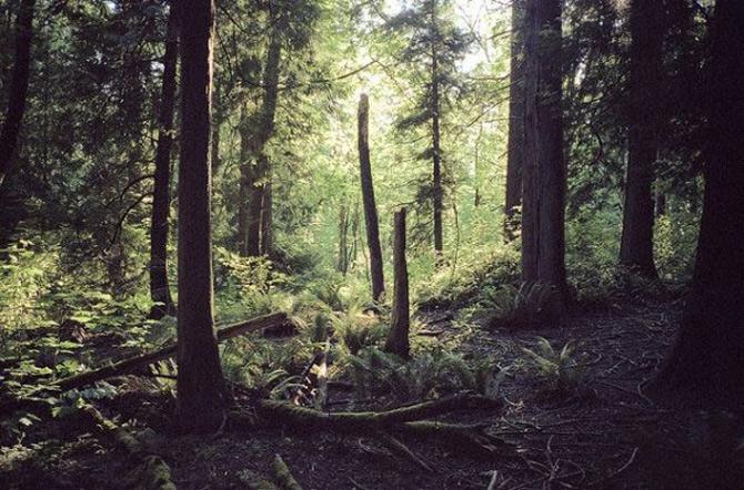 Melancolia peisajelor lui Cody Cob - Poza 14