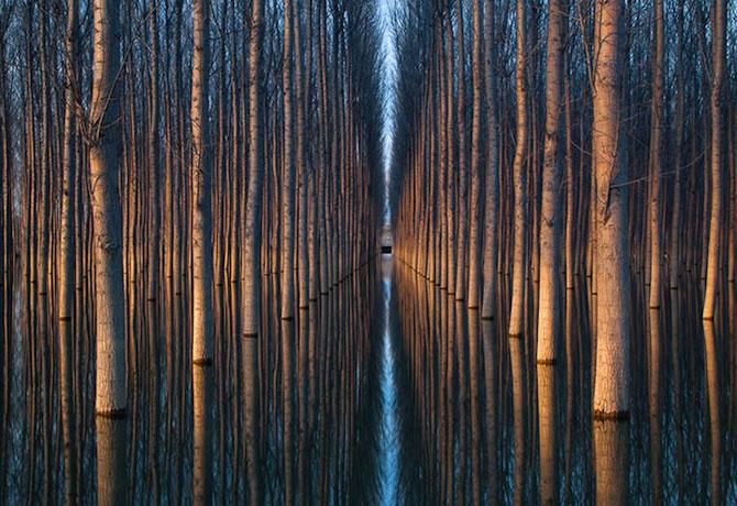 Peisaje cu paduri infinite, de Oliver Delgado - Poza 1