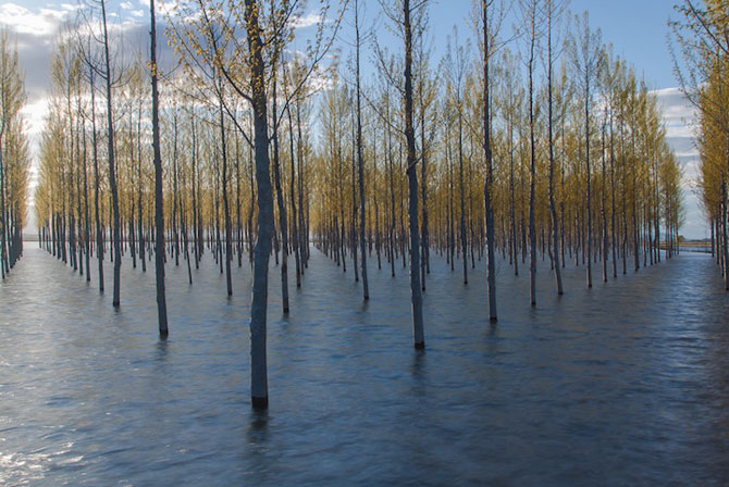 Peisaje cu paduri infinite, de Oliver Delgado - Poza 2