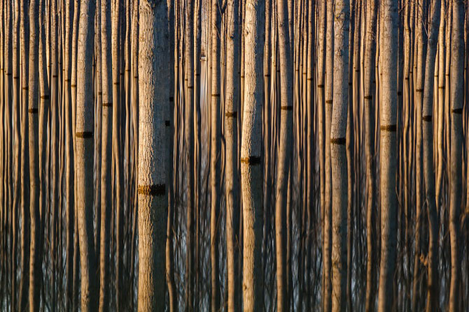 Peisaje cu paduri infinite, de Oliver Delgado - Poza 3