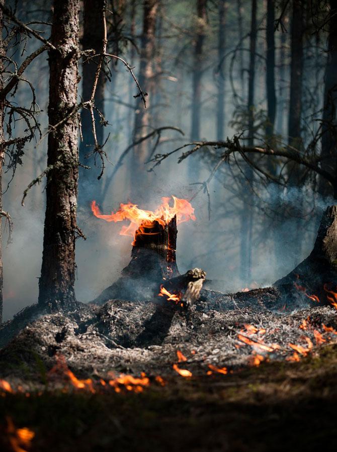 Mats Petersson da foc padurilor - Poza 1