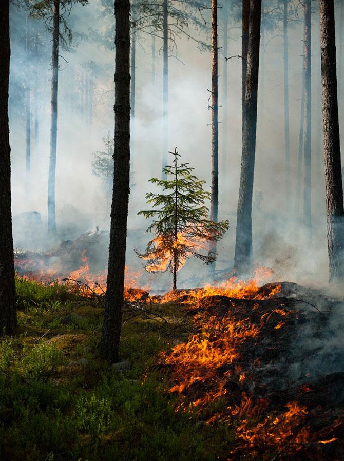 Mats Petersson da foc padurilor - Poza 2