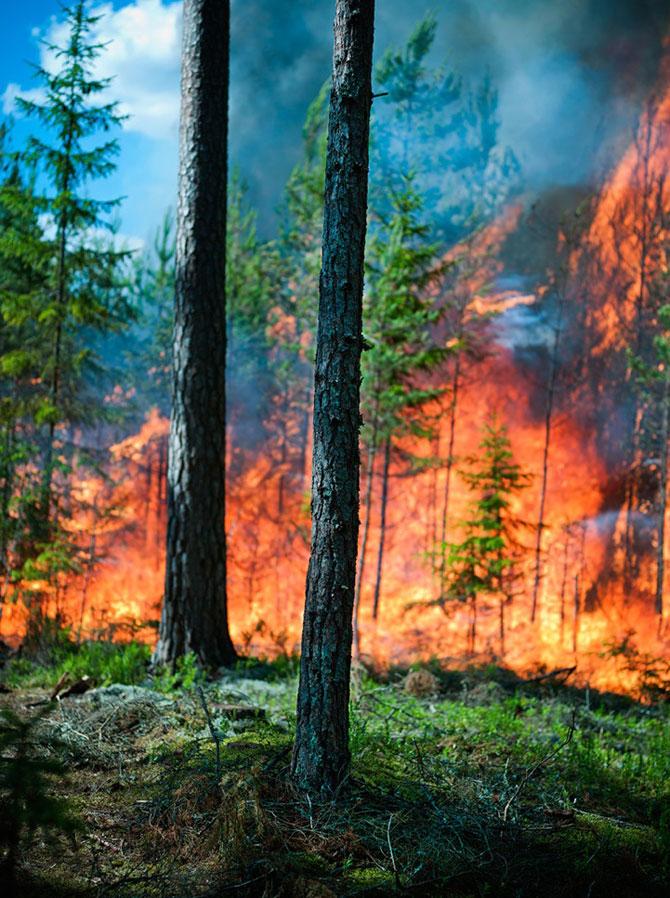 Mats Petersson da foc padurilor - Poza 3