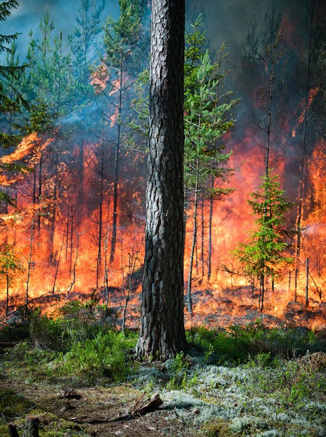 Mats Petersson da foc padurilor - Poza 5