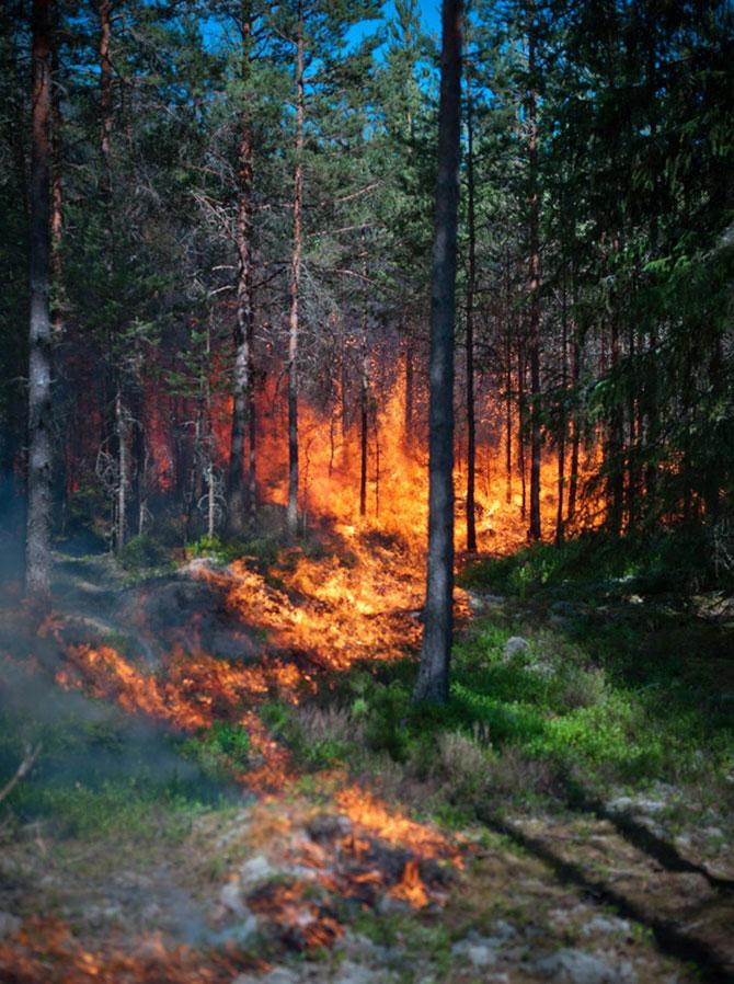 Mats Petersson da foc padurilor - Poza 6