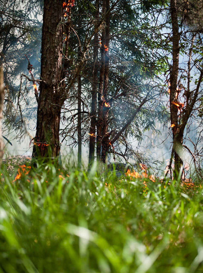 Mats Petersson da foc padurilor - Poza 7