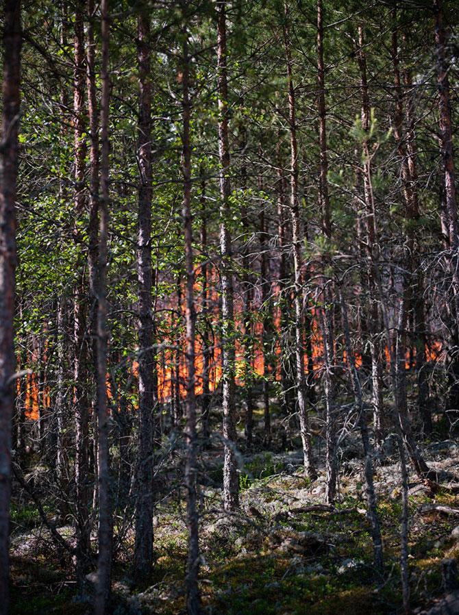 Mats Petersson da foc padurilor - Poza 8