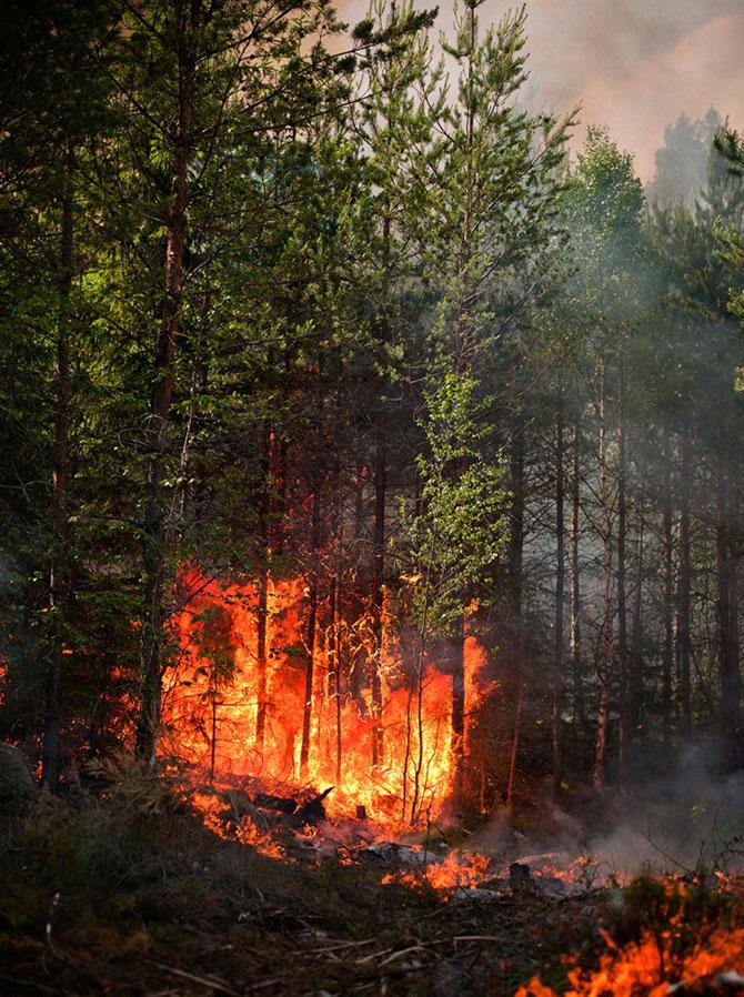 Mats Petersson da foc padurilor - Poza 9