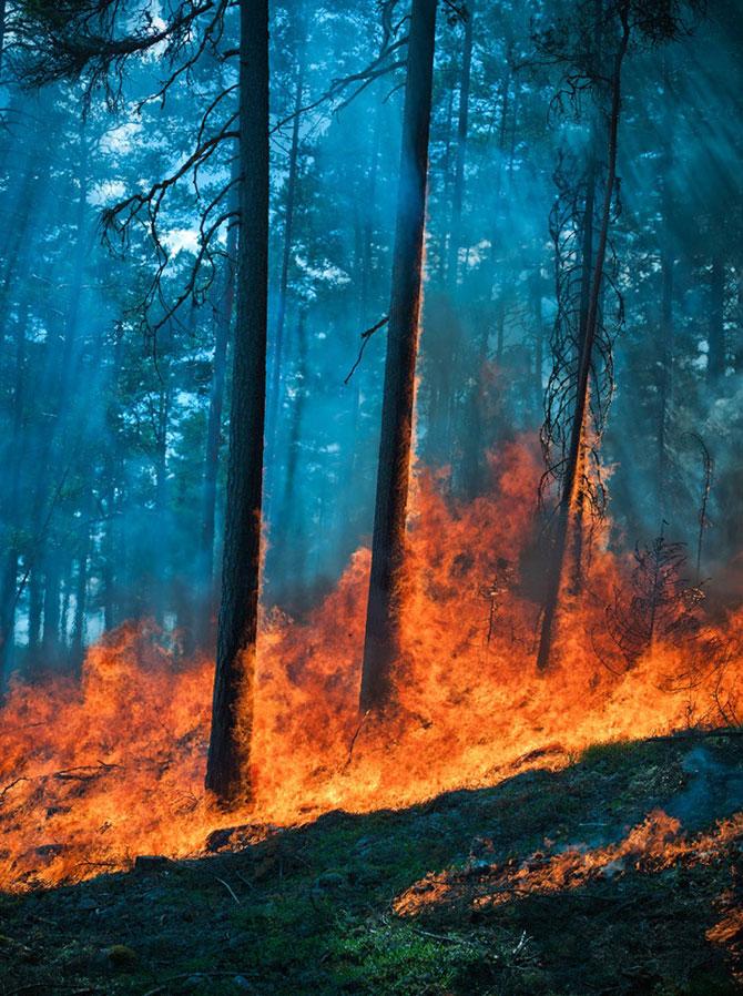 Mats Petersson da foc padurilor - Poza 10