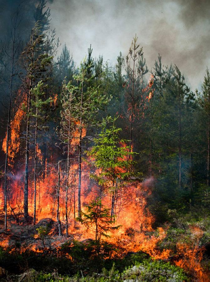 Mats Petersson da foc padurilor - Poza 11