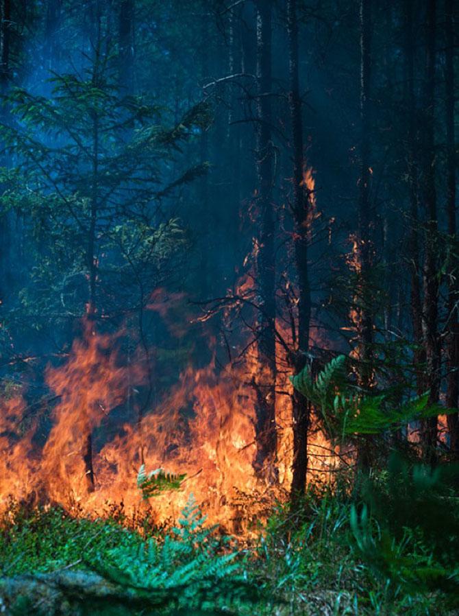 Mats Petersson da foc padurilor - Poza 12