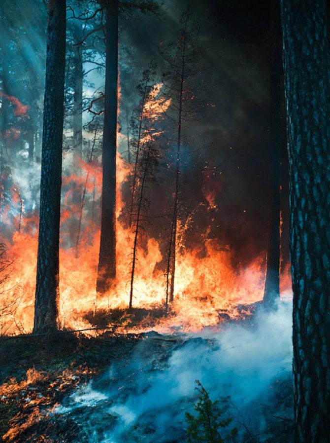 Mats Petersson da foc padurilor - Poza 13