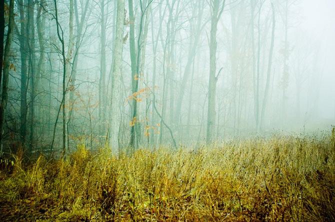 Padurile fermecate din Ohio, cu Joy St. Claire - Poza 3