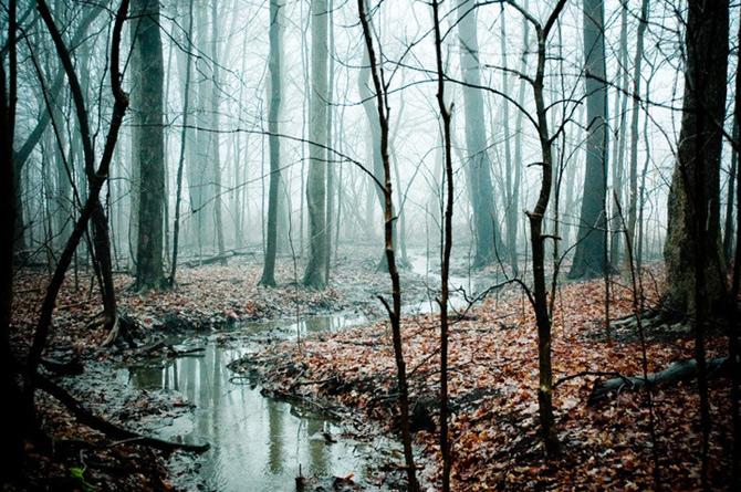 Padurile fermecate din Ohio, cu Joy St. Claire - Poza 4