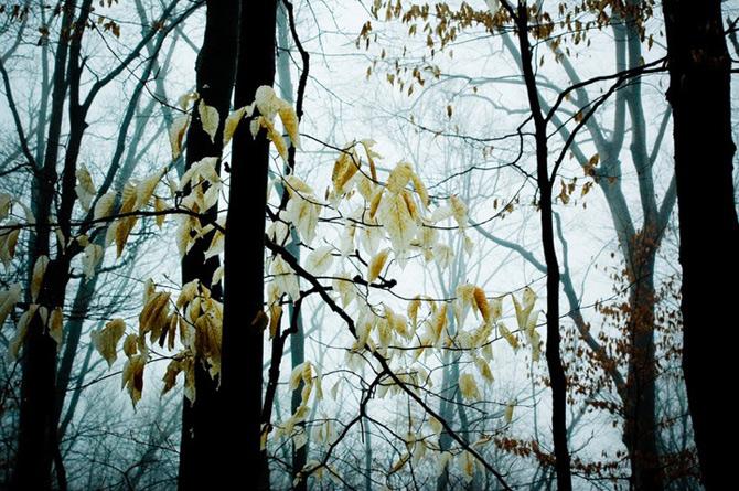 Padurile fermecate din Ohio, cu Joy St. Claire - Poza 7