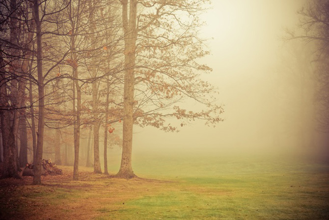 Padurile fermecate din Ohio, cu Joy St. Claire - Poza 10