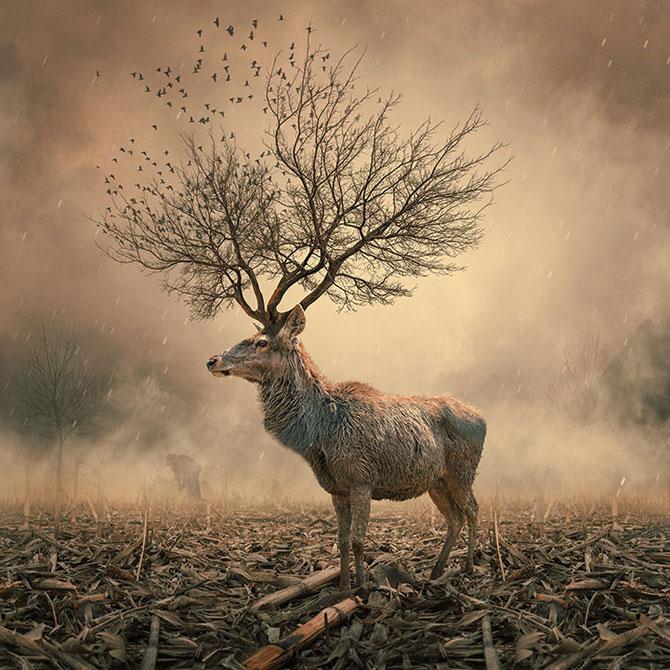 Romanul care creeaza peisaje de vis: Ionut Caras - Poza 2