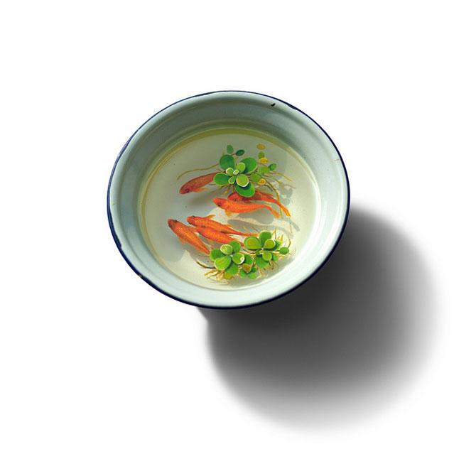 Supa de caracatita sau sculpturi hiper-realiste? - Poza 4