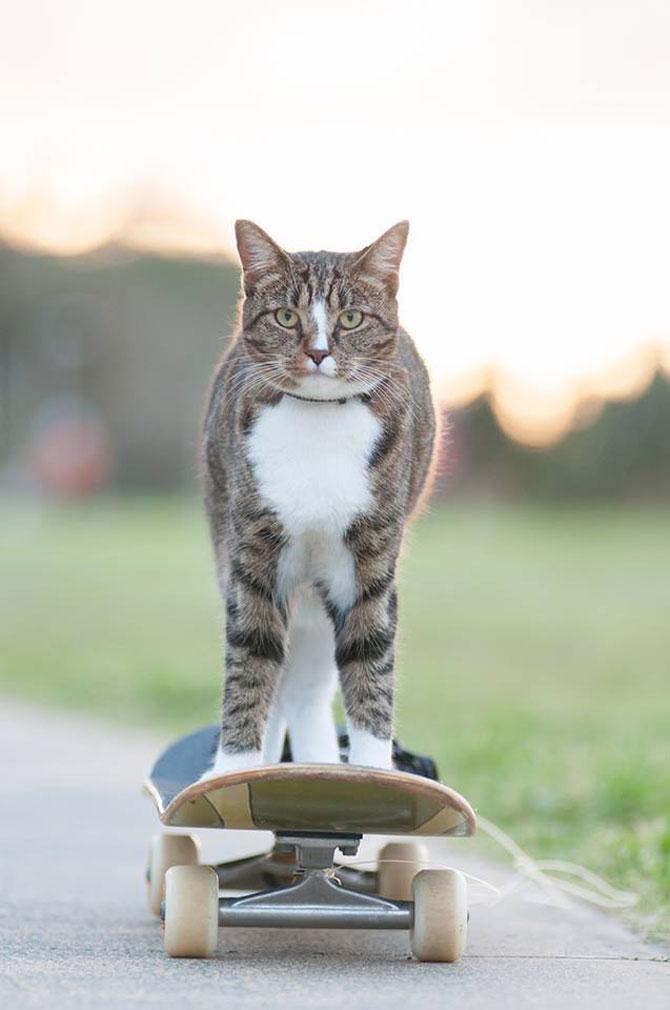 Didga, pisica pe skateboard, cucereste Australia - Poza 1