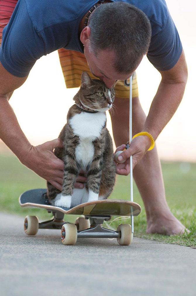 Didga, pisica pe skateboard, cucereste Australia - Poza 2