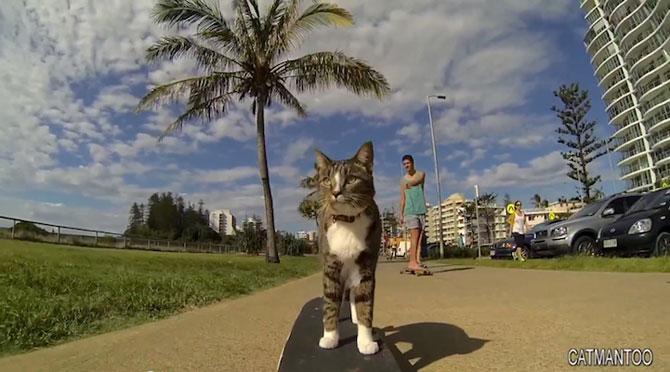 Didga, pisica pe skateboard, cucereste Australia - Poza 3