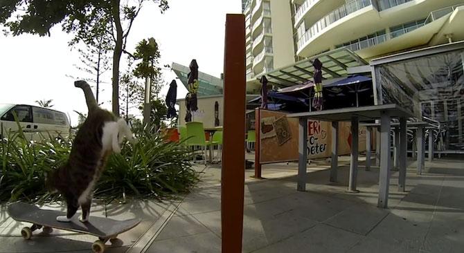 Didga, pisica pe skateboard, cucereste Australia - Poza 4