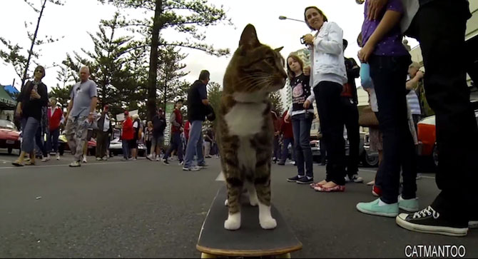 Didga, pisica pe skateboard, cucereste Australia - Poza 5