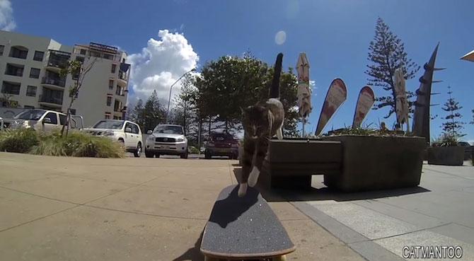 Didga, pisica pe skateboard, cucereste Australia - Poza 6