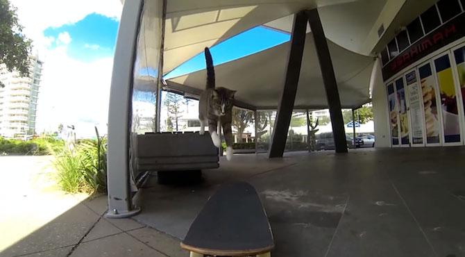 Didga, pisica pe skateboard, cucereste Australia - Poza 7