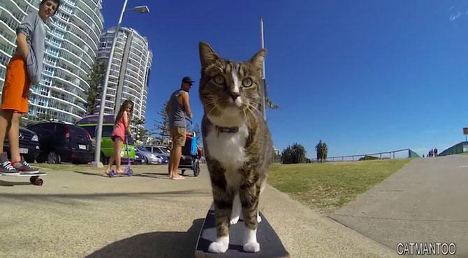 Didga, pisica pe skateboard, cucereste Australia - Poza 8