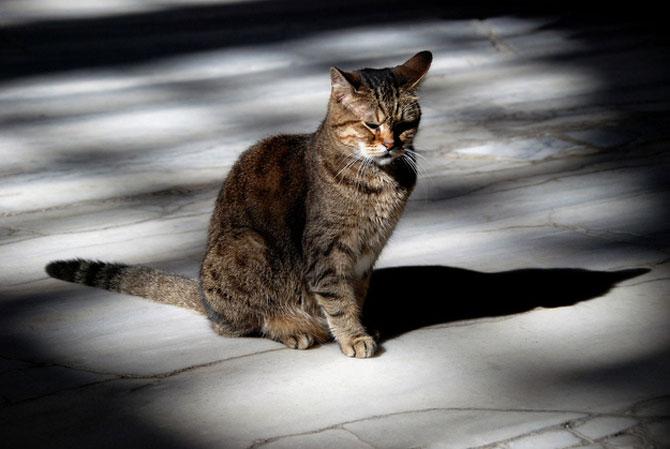 Gli, motanul de la Hagia Sophia - Poza 2
