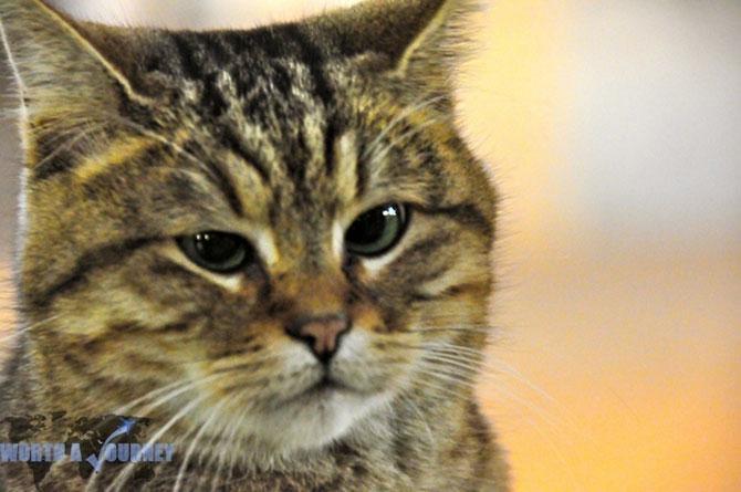 Gli, motanul de la Hagia Sophia - Poza 3