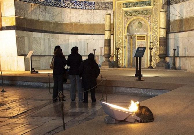 Gli, motanul de la Hagia Sophia - Poza 5