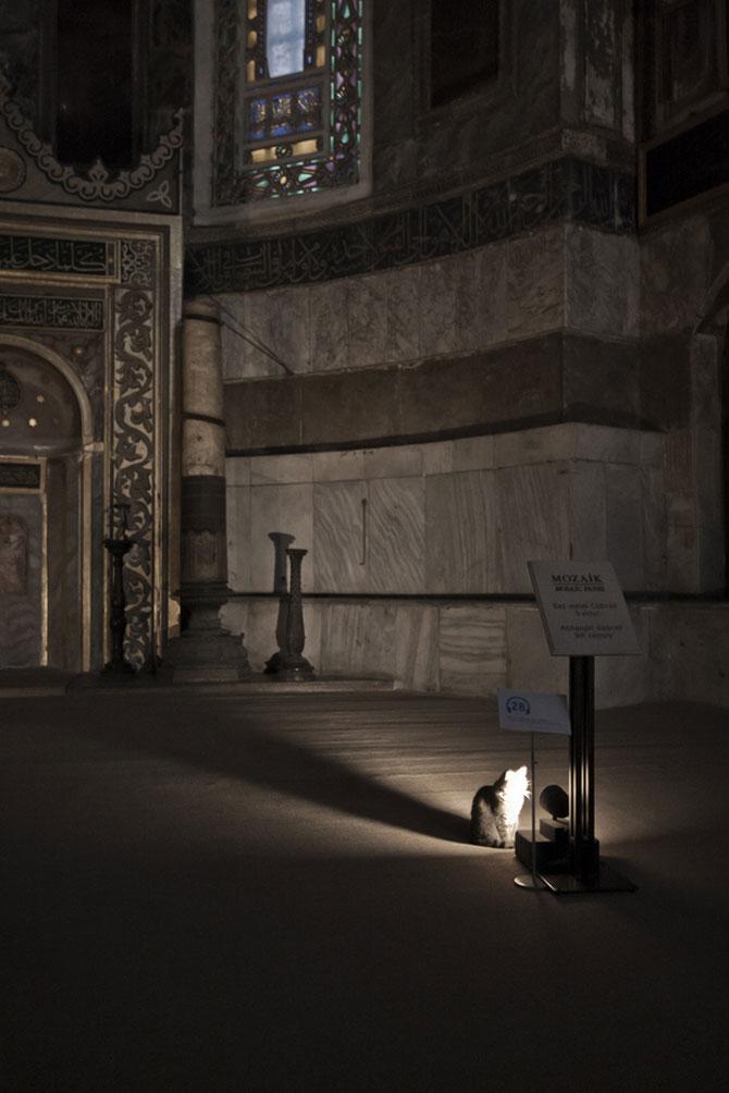 Gli, motanul de la Hagia Sophia - Poza 6