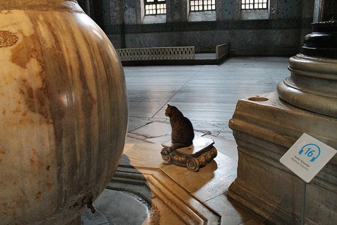 Gli, motanul de la Hagia Sophia - Poza 7