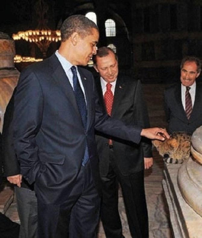 Gli, motanul de la Hagia Sophia - Poza 8