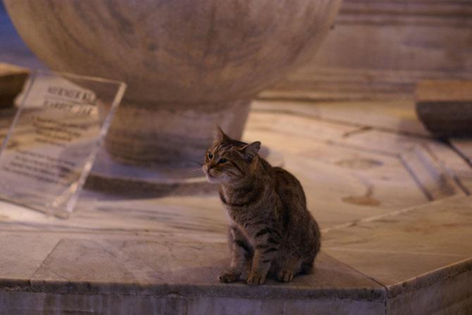 Gli, motanul de la Hagia Sophia - Poza 9