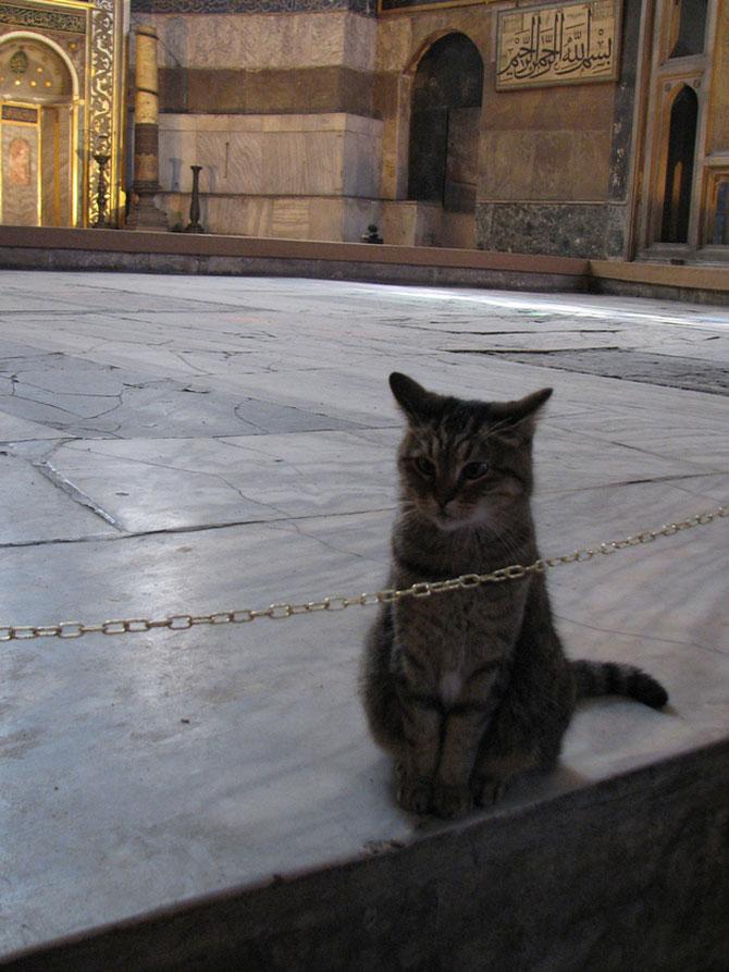 Gli, motanul de la Hagia Sophia - Poza 10