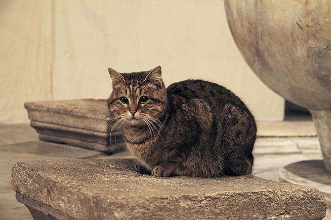 Gli, motanul de la Hagia Sophia - Poza 11