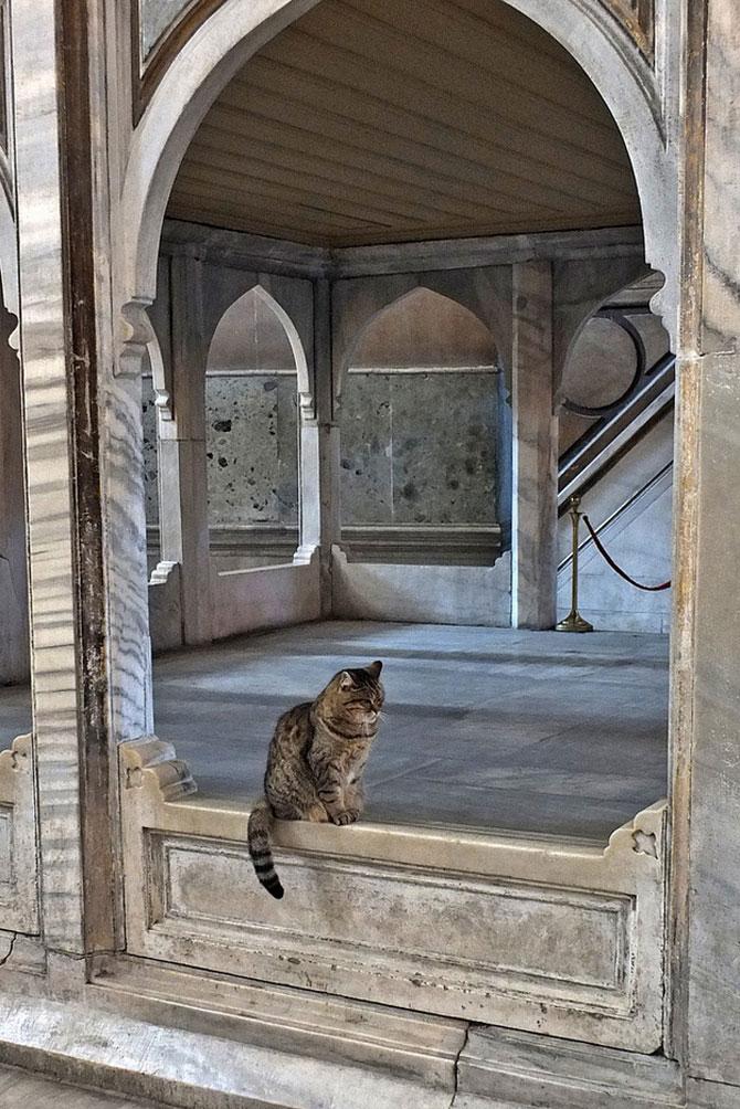 Gli, motanul de la Hagia Sophia - Poza 12