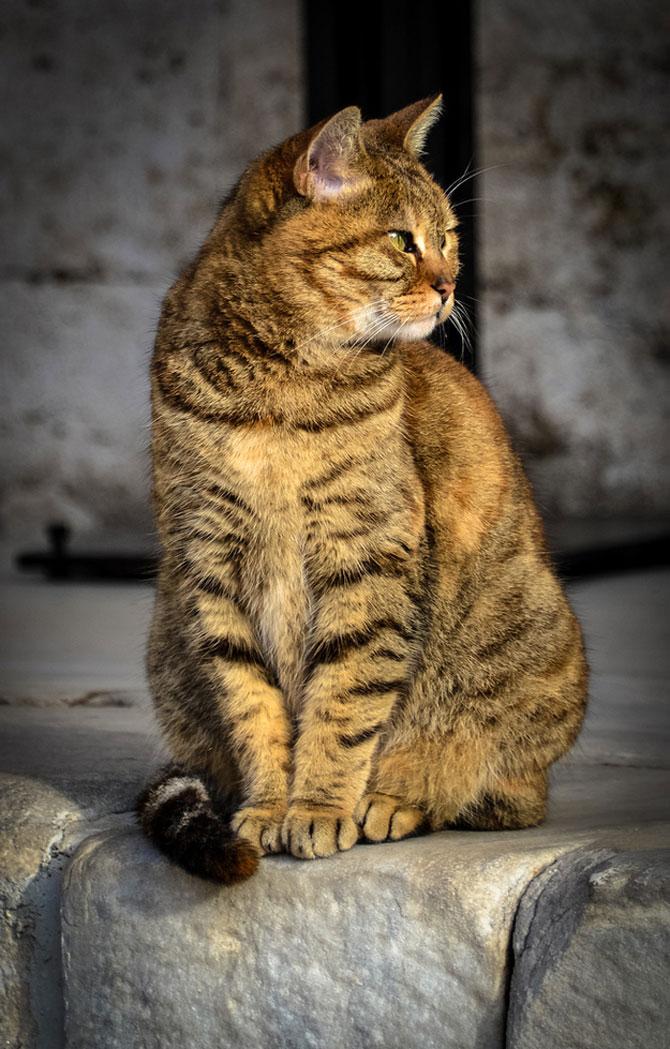 Gli, motanul de la Hagia Sophia - Poza 13