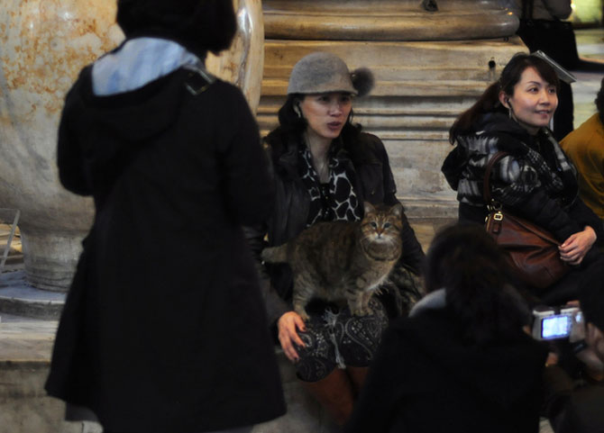 Gli, motanul de la Hagia Sophia - Poza 14