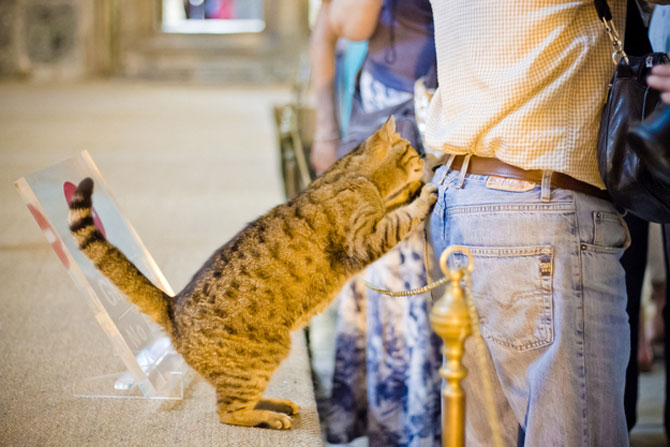 Gli, motanul de la Hagia Sophia - Poza 15