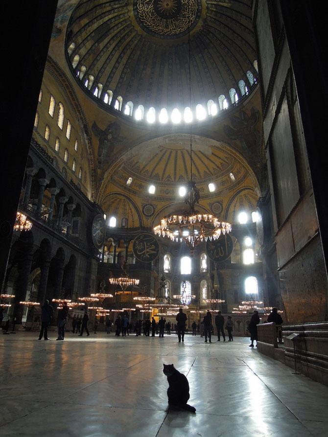 Gli, motanul de la Hagia Sophia - Poza 16