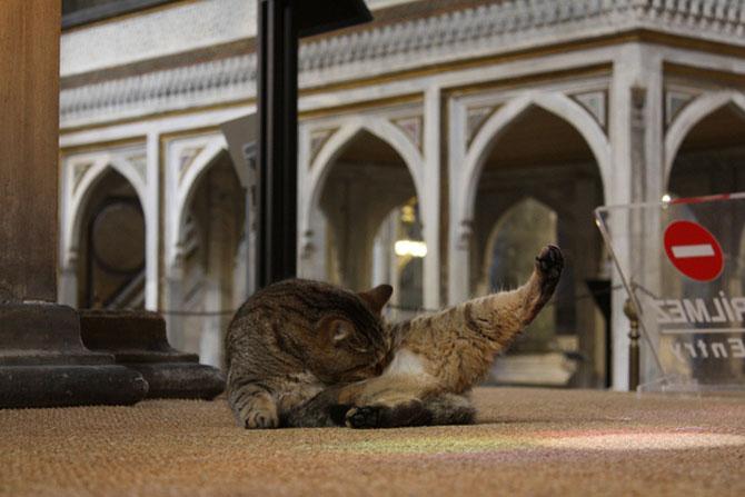 Gli, motanul de la Hagia Sophia - Poza 17