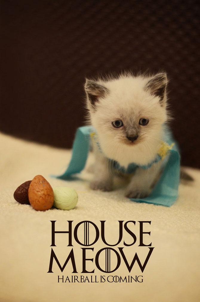 Pisici costumate in personaje celebre - Poza 1