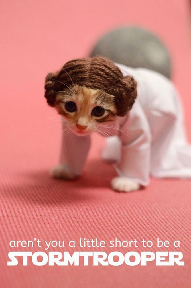 Pisici costumate in personaje celebre - Poza 3